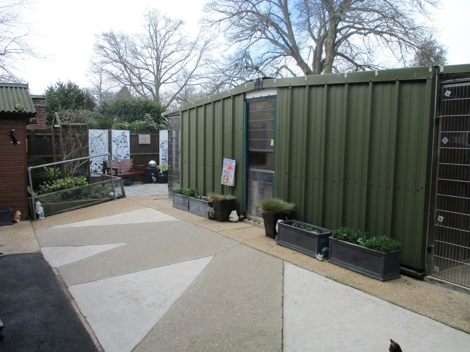Rear of outside cattery