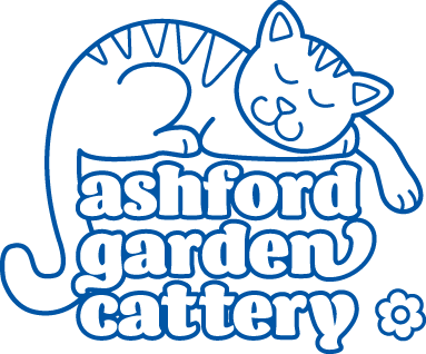 Adopt a cat   RSPCA ASHFORD   Cat Re-homing Centre